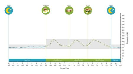 "Still from the interactive learning tool showing the normal glucose trajectory in a person without diabetes. The events highlighted include the overnight fasting glucose and three meal actions on glucose. These events stay within the ""on target"" range, shown as a grey bar. Created in collaboration with Rasa Kazlauskaite, M.D., Rush University Prevention Center, Chicago. C. Lorenzo © 2017"